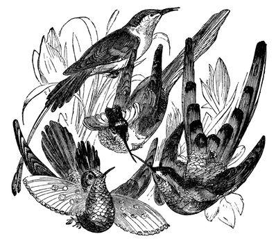 Antique Decorative Bird Engraving