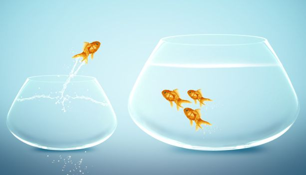 goldfish jumping into bigger fishbowl