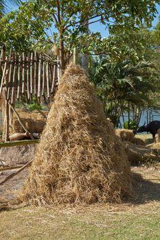 Pile of rice straw
