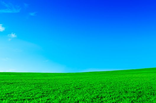 Bright green field on a sunny day