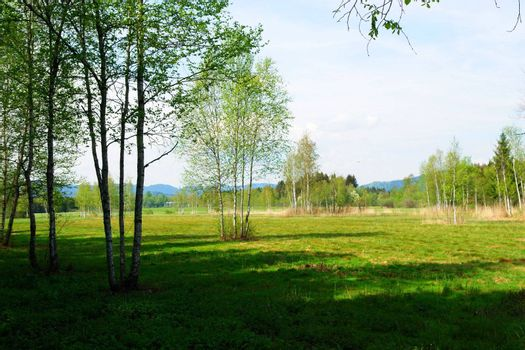 a beautiful summer landscape