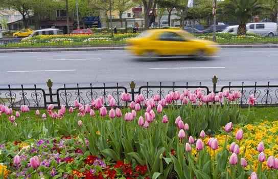 SPRING IN ISTANBUL, ISTANBUL, TURKEY, APRIL 11, 2012: Spring flowers in the front and a yellow speedy taxi passing by behind, Istanbul, Turkey.