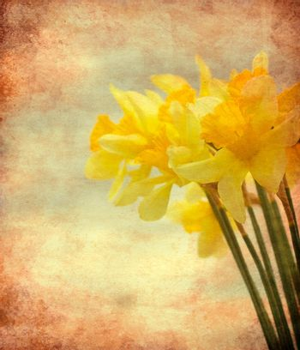 Vintage Daffodil flowers