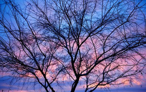 Barren Tree Silhouette
