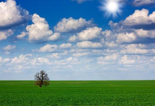 Field,tree and sky