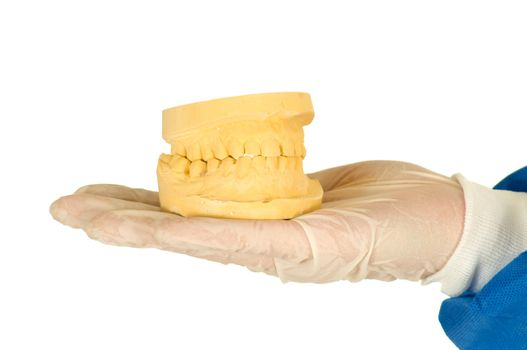 dentist holding a mold of denture