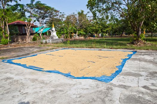Paddy husk drying to reduce humidity