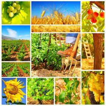 Harvest concept collage