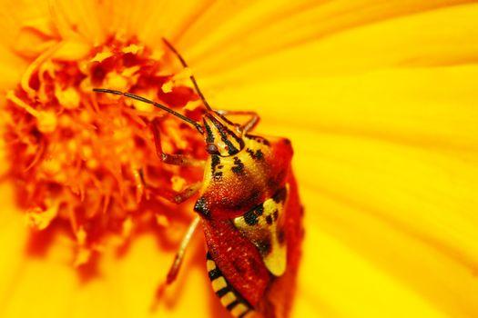 Closeup on flower