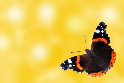 abstract summer background with butterfly (Red Admiral)