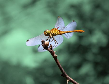 dragonfly on a branch over emerald background