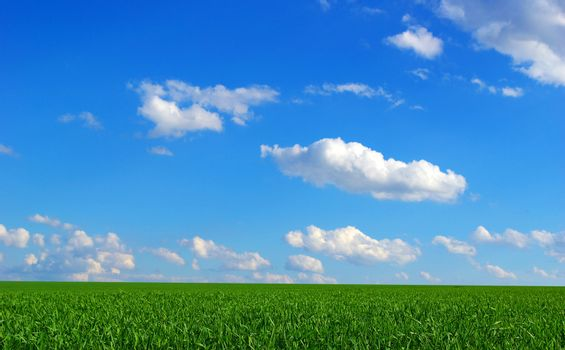field on a background of the blue sky