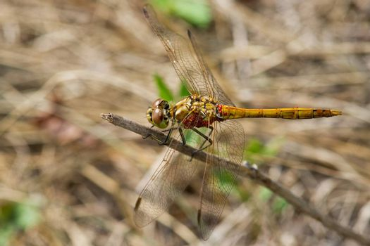 Dragonfly at Lake Pavlovka