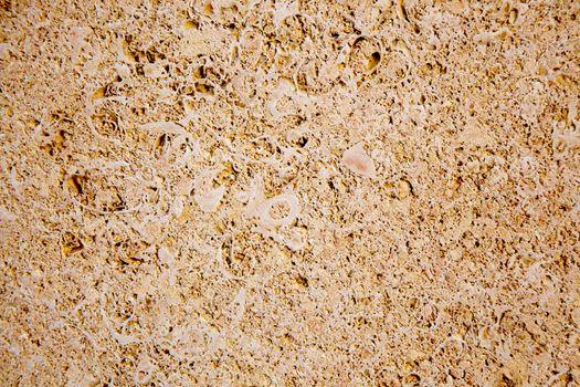limestone sandstone texture with animal shells