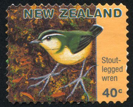 Stout legged wren