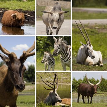 Collage of seven different animals in the same picture
