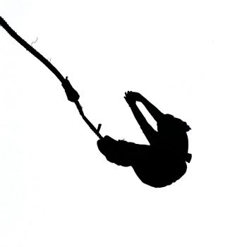 Black silhouette of bungee jumper on white