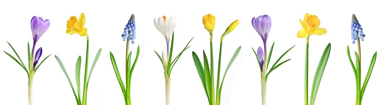 Assorted spring flowers in a row isolated on white background