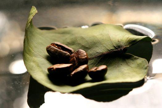 coffe leaf