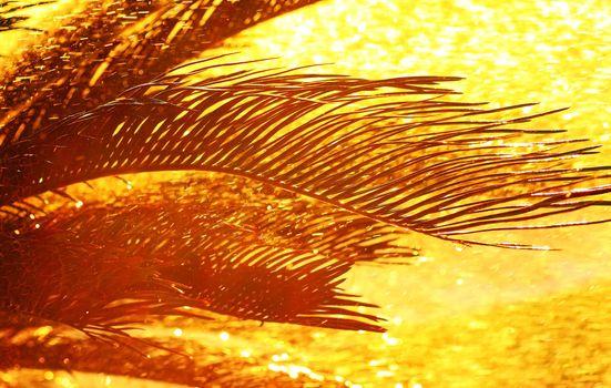 Palm tree leaves silhouette