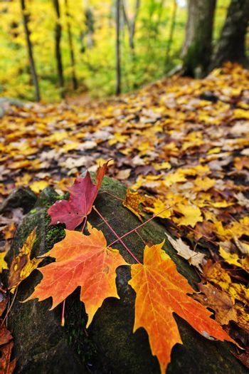 Fall leaves in forest