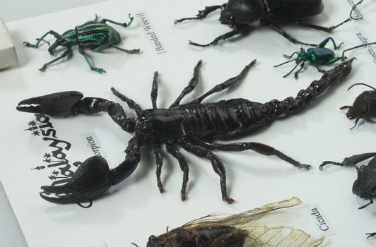 close up of the scorpion and others