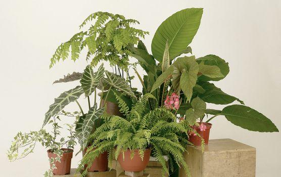 Assorted green houseplants in pots