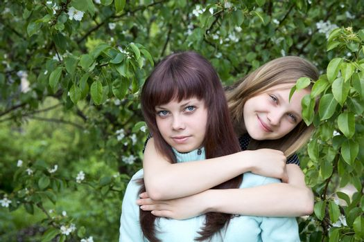 Two girls of the teenager against a blossoming pear in  spring afternoon