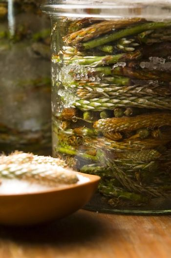 Natural medicine - syrup made of pine sprouts