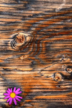 Textured Plywood