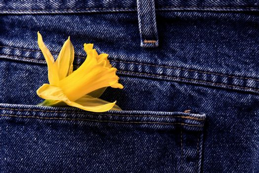 Daffodil and Blue Jeans