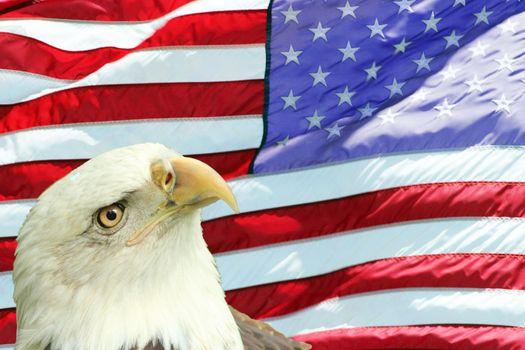 Bald Eagle Set Against American Flag