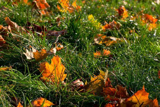 Leafless foliage