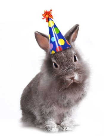 Angry Furry Grey Rabbit With a Birthday Hat On