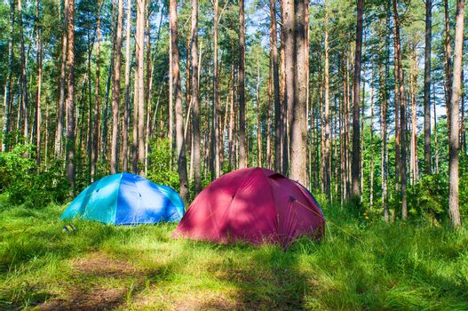Tourist camp in the forest