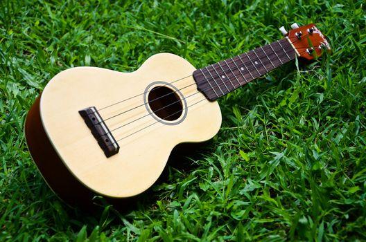 Ukulele guitar on lawn background