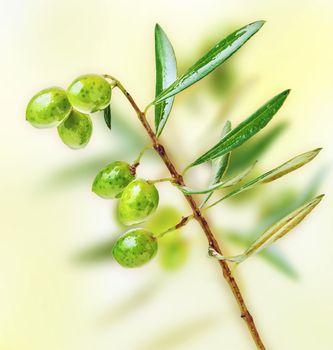 Fresh green olive tree branch