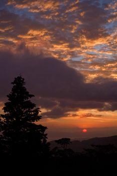 Idyllic Forest Sunset