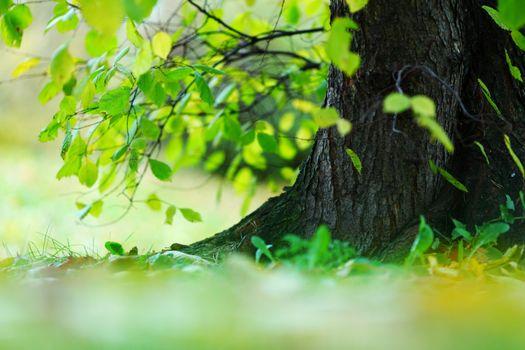 Tree foliage and sun