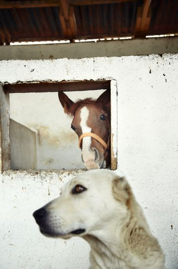 Dog guarding the horse in the stable. Natural light and colors