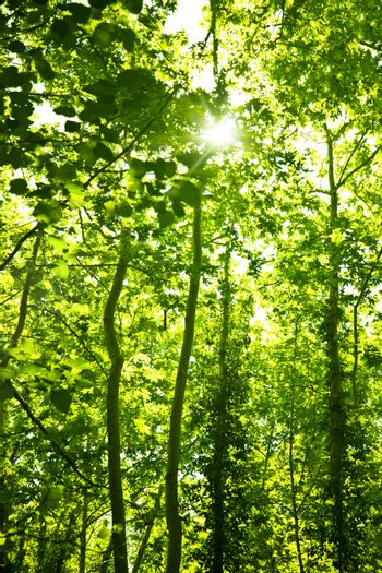 Green forest trees background