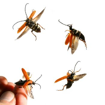 bug fly to you