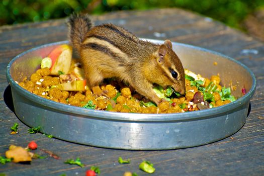 Chipmunk meal
