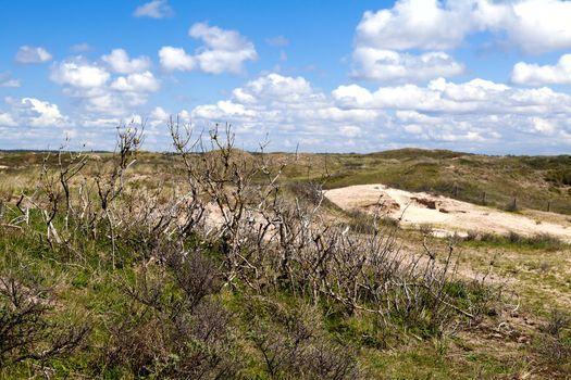 dry bush in dunes