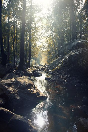 Small river in the rainforest. Vertical photo with natural colors and darkness