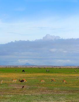 African Wild animals grazing