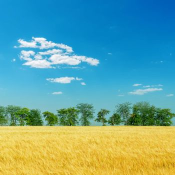 harvest field with trees under deep blue sky