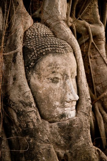 Buddha head strangled by the roots of a banyan tree in Ayuthaya