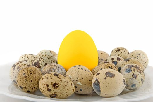 Big Gold egg in many quail eggs isolated on white