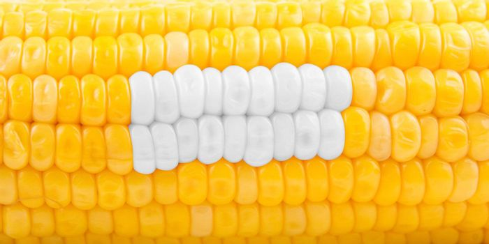 Stomatology concept of ripe yellow corn as teeth